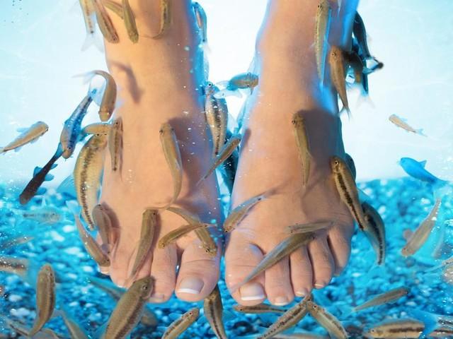 Le monde médical met en garde: la fish pédicure n'est pas sans risques, une infection est toujours possible!
