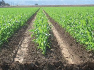 Campagne agricole 2020-2021 : le ministère confirme l'amélioration des perspectives