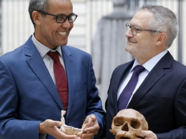 L'Homo sapiens: son crâne unique et ses nombreux mystères