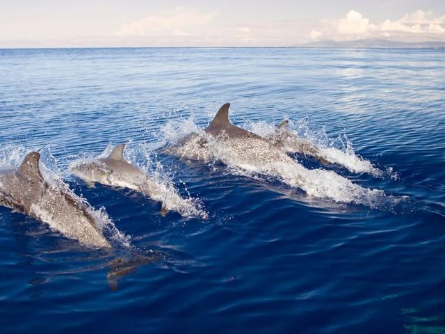 Pourquoi les dauphins vivent un cauchemar en 2020 sur les côtes françaises