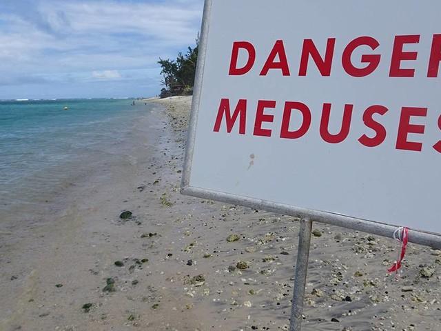 Des méduses signalées à Saint-Leu