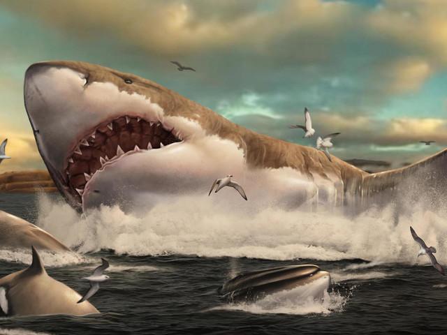 """L'ancêtre préhistorique des """"Dents de la mer"""" a grandi en pouponnière"""
