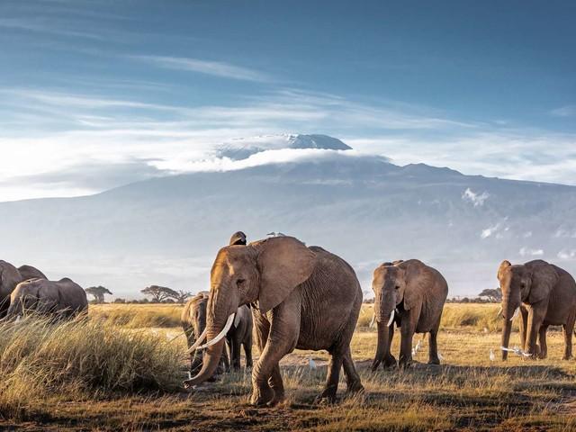 La CITES veut resserrer l'étau sur le braconnage des éléphants et des rhinocéros