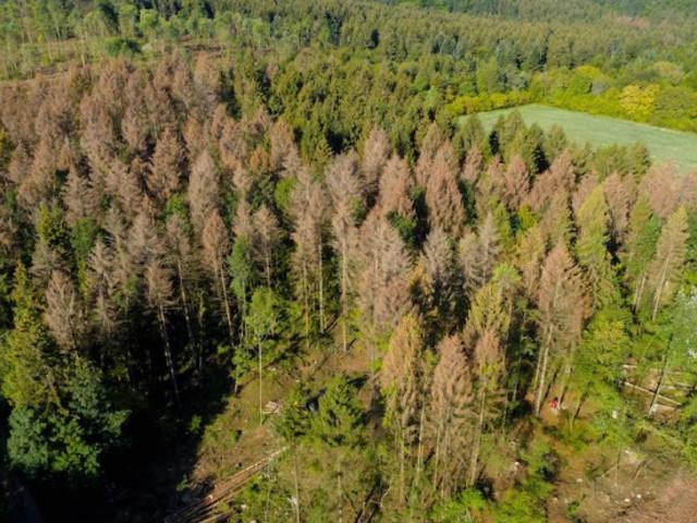 A l'heure où l'Amazonie brûle, alerte sur les forêts françaises