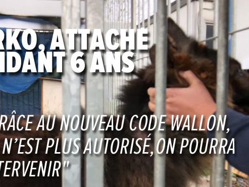 Tout le monde ne pourra plus détenir un animal en Wallonie dès ce 1er janvier: voici tout ce qui change en la matière