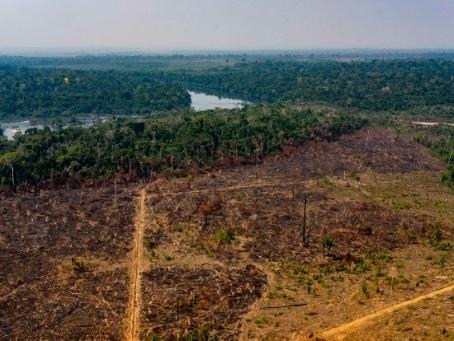 Brésil: un militant indigène défenseur de la forêt tué dans une attaque