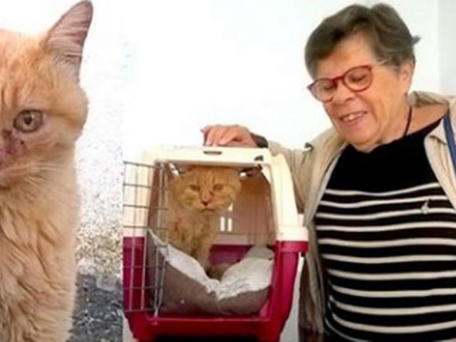 Elle retrouve son chat... 10 ans après l'avoir perdu!
