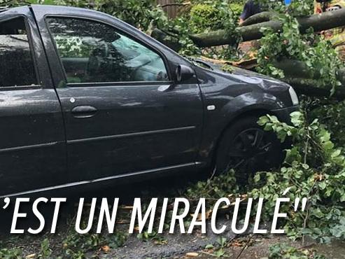 Un arbre est tombé sur la voiture d'Octavio alors qu'il roulait à Braine-l'Alleud: pourquoi sa compagne ne décolère pas?