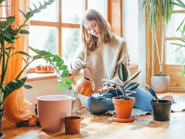 À quelle fréquence faut-il arroser ses plantes d'intérieur ?