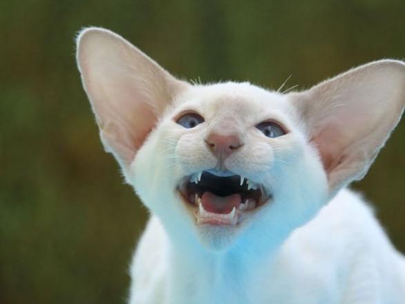 Envoyé par erreur par la poste, un chat passe plus d'une semaine dans un colis