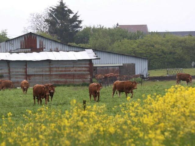 """Politique. Revenus des agriculteurs : ce que prévoit la nouvelle loi """"Egalim 2"""""""
