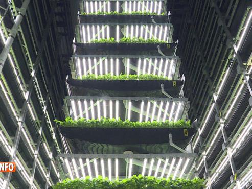 Une ferme verticale de New York a remplacé ses agriculteurs par des ingénieurs: une solution pour nourrir la planète?