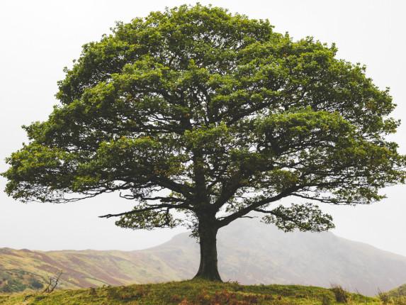 Ce qu'il faut retenir du 2e Conseil de défense écologique