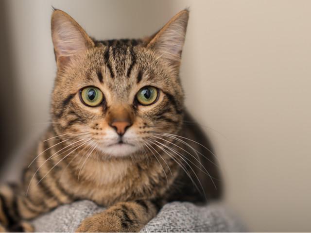 Des chercheurs ont étudié des milliers de chats et ont identifié 7 traits de personnalité distincts