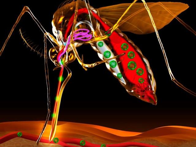 """Épidémiologie, problématiques et enjeux (7/8) : """"Zika : le pacte du moustique et du virus"""""""