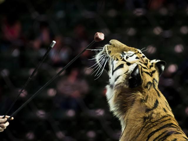 Paris s'engage à devenir une ville sans animaux sauvages dans les cirques