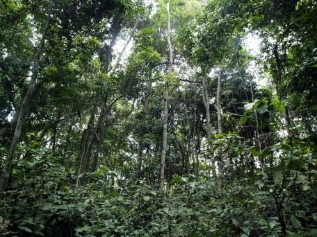 """Climat: les forêts tropicales, un """"poumon"""" qui s'essouffle"""