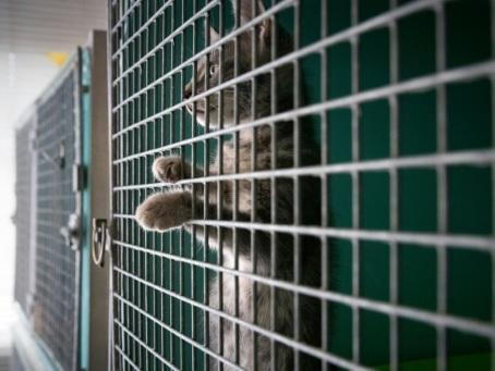 Noël des animaux de la SPA : une nouvelle famille pour près de 1.200 animaux