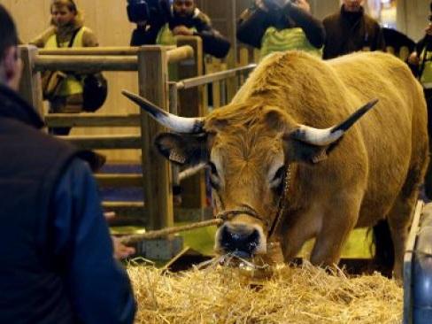 Salon de l'agriculture : bilan d'une semaine très révélatrice sur l'état de l'échiquier politique français