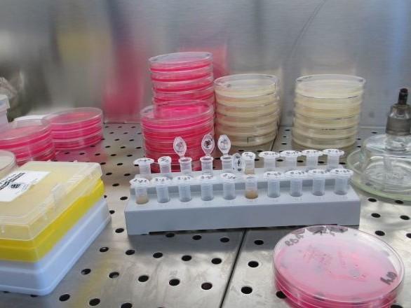 Des organismes inconnus des chercheurs découverts à des milliers de mètres sous terre