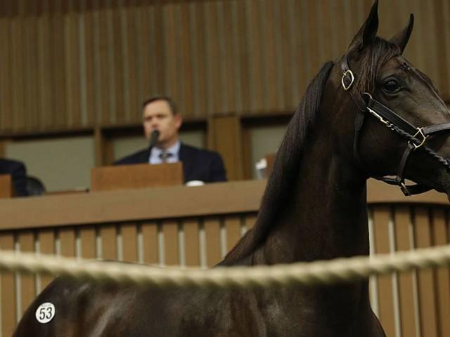 Un cheval de course vendu aux enchères pour un montant record