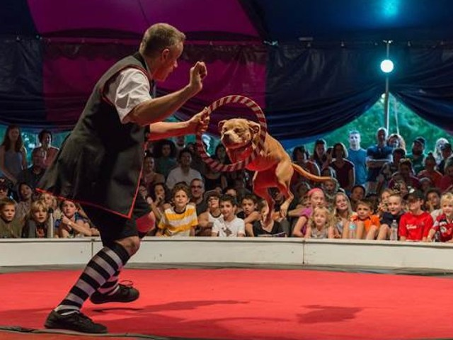 Ce cirque a remplacé lions et éléphants par des chiens sauvés de la maltraitance