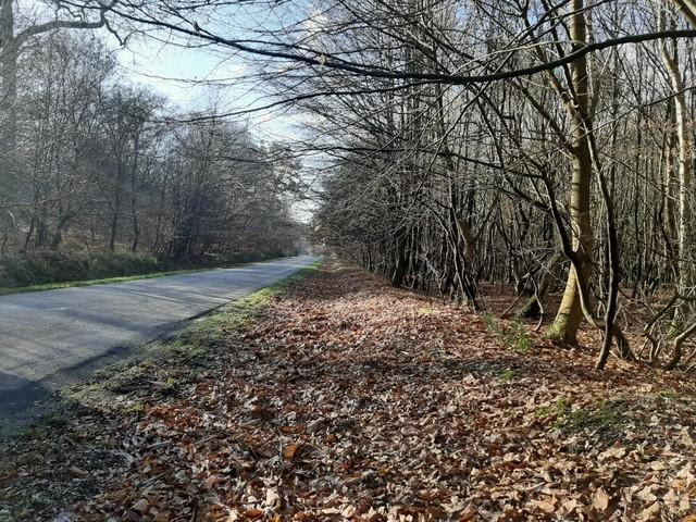 Une femme retrouvée morte dans une forêt, près de Rouen: une enquête ouverte