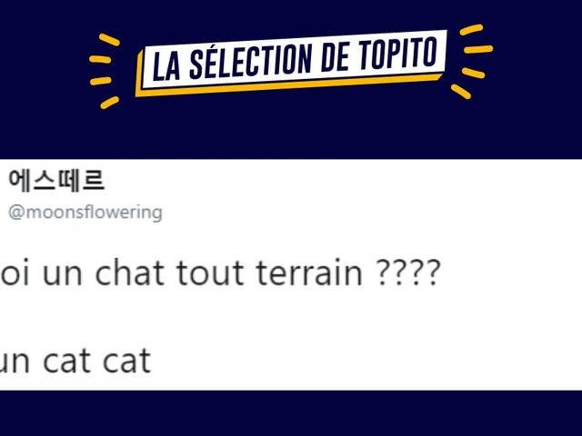 Top 18 des meilleurs tweets sur les chats épisode 2, toujours aussi mignons (mais chiants)