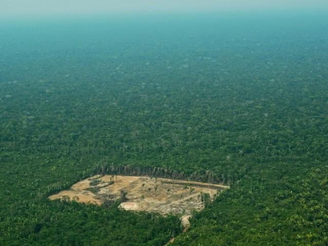 Brésil : la déforestation de l'Amazonie a presque doublé en un an