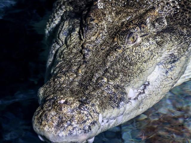 Un Australien retrouvé vivant trois semaines après sa disparition dans une forêt pleine de crocodiles