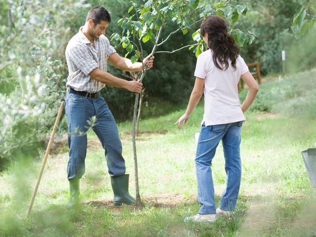 Journée des initiatives vertes du mercredi 11 décembre : demandez tout le programme !