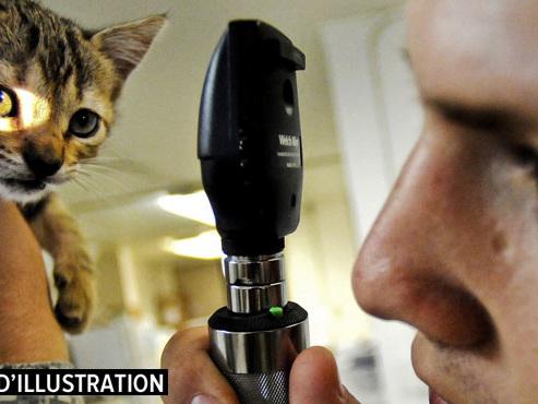 Faire soigner son animal de compagnie coûte de plus en plus cher: comment l'expliquer?