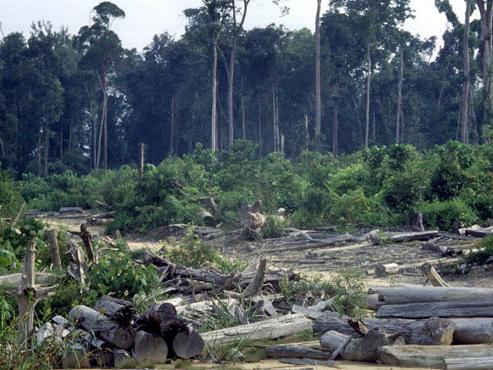 """Les forêts absorbent 25 à 30% des gaz à effet de serre, mais elles s'essoufflent: """"La situation a changé"""""""