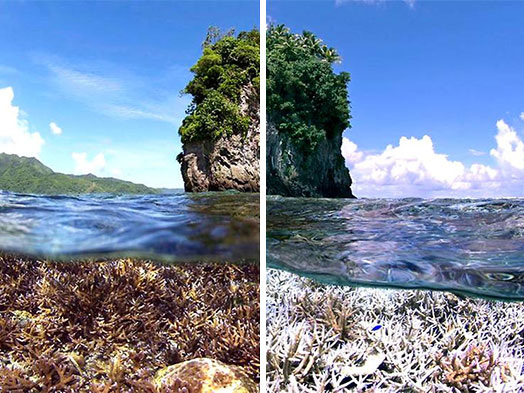[Zone 42] 10 years challenge : déforestation, fonte des glaces, pollution des océans, la réalité de notre planète en 30 photos