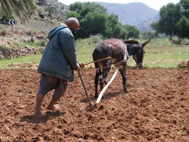 Une aide pour les petits agriculteurs marocains