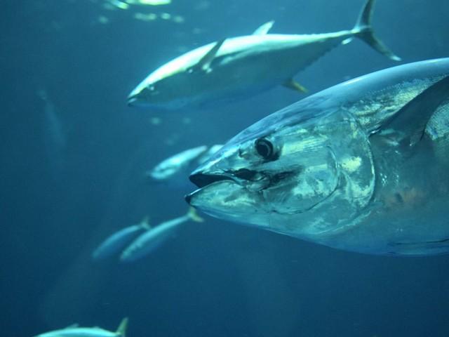 Les océans manquent de plus en plus d'oxygène