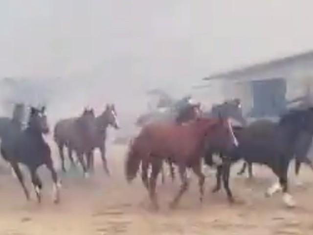 Les terribles images de ces chevaux effrayés par les incendies en Californie