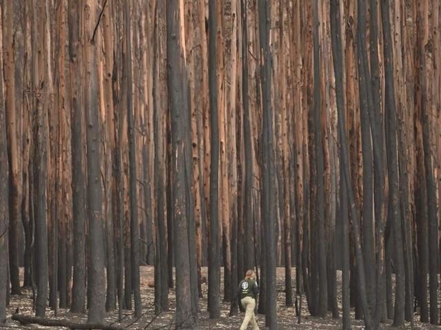La pluie est enfin tombée sur les incendies en Australie