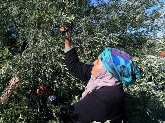 En Tunisie, la couverture santé des paysannes à portée de SMS