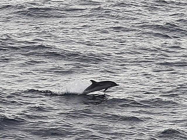 Italie : mort mystérieuse de 34 cétacés près des côtes toscanes depuis janvier