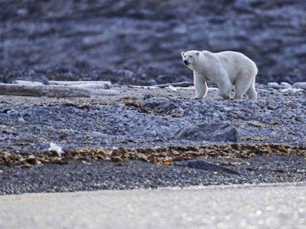 """Fonte de la banquise : """"L'Arctique est notre vigie climatique"""""""