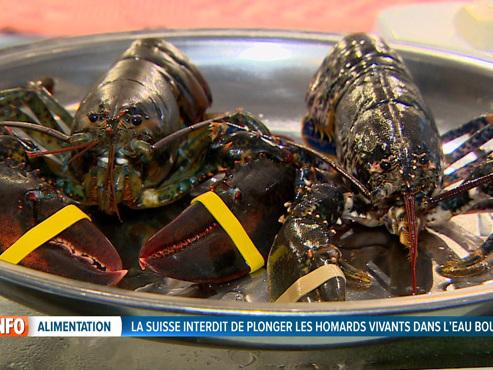 La Suisse ne veut plus de homards ébouillantés vifs: qu'en est-il chez nous ?