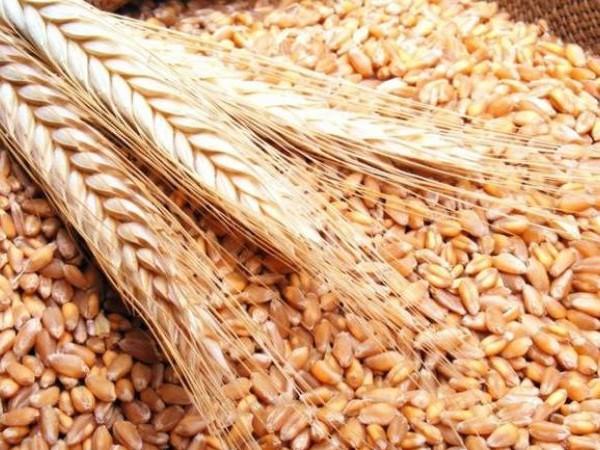 Tunisie: La production de céréale ne couvre que 50% des besoins du pays, selon Samir Taieb