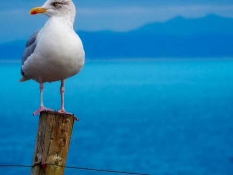 Vacances d'été: Envoyez-nous vos photos d'animaux rencontrés à la plage