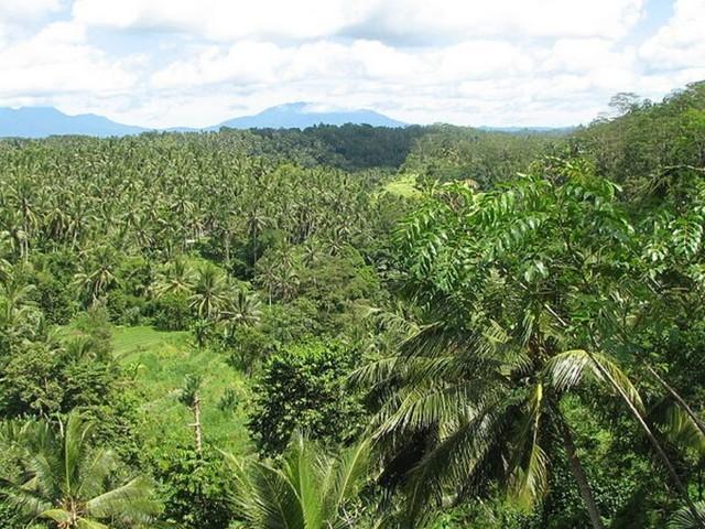 Les forêts tropicales vont commencer à émettre plus de CO2 qu'elles n'en absorbent