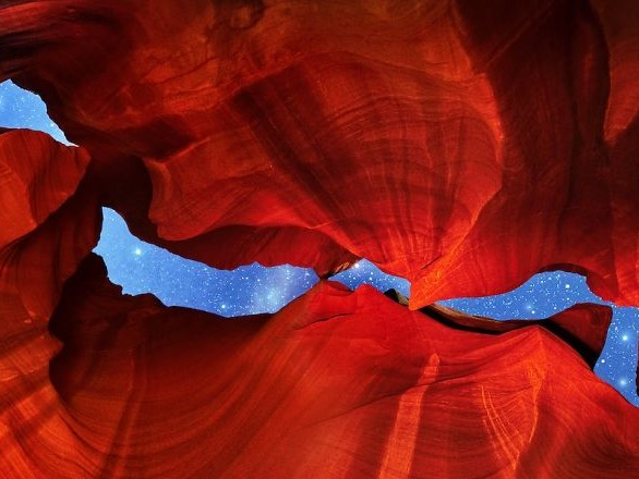 Découvrez les gagnants du concours international du photographe nature de l'année 2019