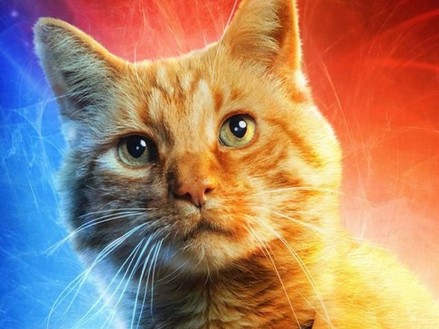 Voici la véritable histoire du chat Goose, fidèle compagnon de Captain Marvel
