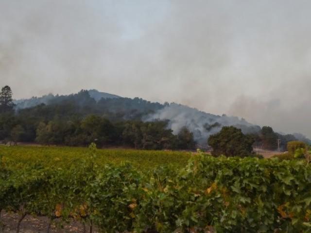 En Californie, des vignes presque intactes au milieu du chaos