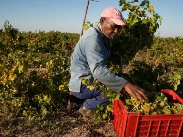 Le vin sud-africain en quête de qualité, d'image et surtout de prix