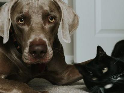 Animaux : découvrez Kozoo, la nouvelle assurance chien et chat